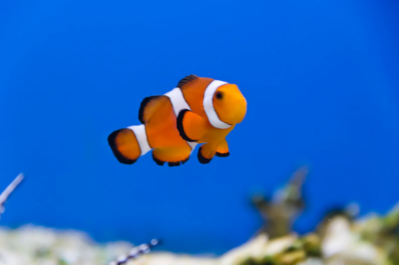 Is finding a babysitter like finding Nemo?